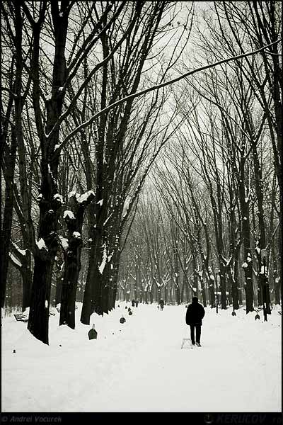Fotografia Sania pe aleea alba / Sleigh On The White Alley, album Orasul Bucuresti - Parcuri si gradini / Bucharest City - Parks and Gardens, Bucuresti / Bucharest, Romania / Roumanie, KERUCOV .ro © 1997 - 2018 || Andrei Vocurek